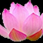 cropped-logo-hoasen1.png